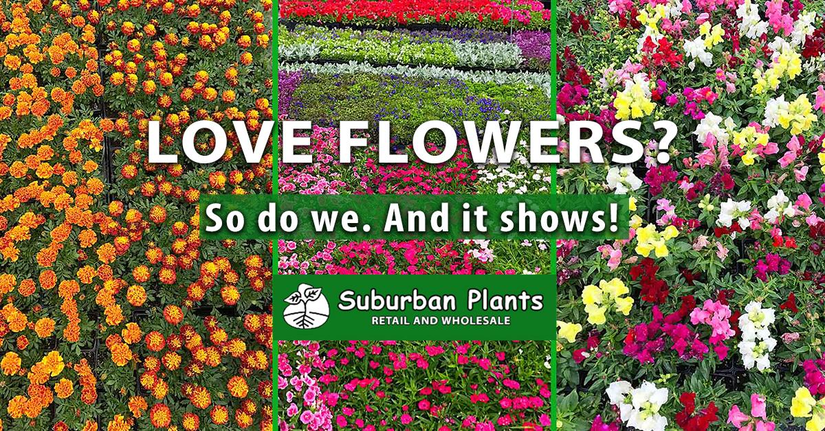 Home - Suburban Plants